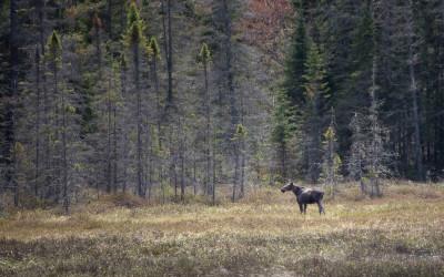 Unterwegs in Ontario: Warum sich ein Besuch im Algonquin Provincial Park lohnt